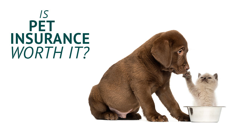 Puppy and kitten with text Is Pet Insurance Worth the Cost?